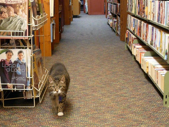 Look for Tigger inside of Thimbleberry Books, which sells new and used reading materials downtown.