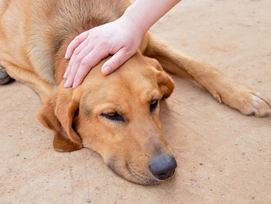 636431869039869443-petting-stray-dog-GettyImages-529428412.jpg