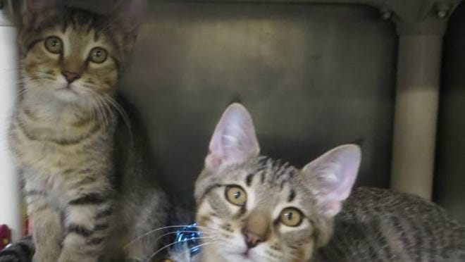 Jack and Owen are bonded brothers who need to be adopted together.