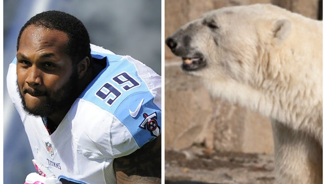 Jurrell Casey reached 19.53 mph while chasing the Jet's Brandon Marshall. A polar bear reaches 18.6 mph.
