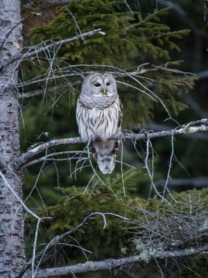 "The ""Owl Prowl"" at the Rogers Center in Sherburne could include some avian encounters."