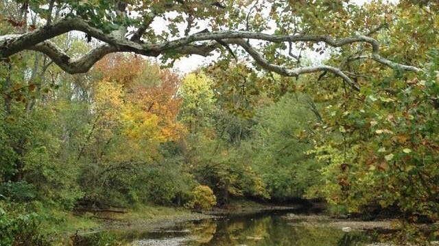 A Sycamore tree overlooking the river was Woody's place of solace.
