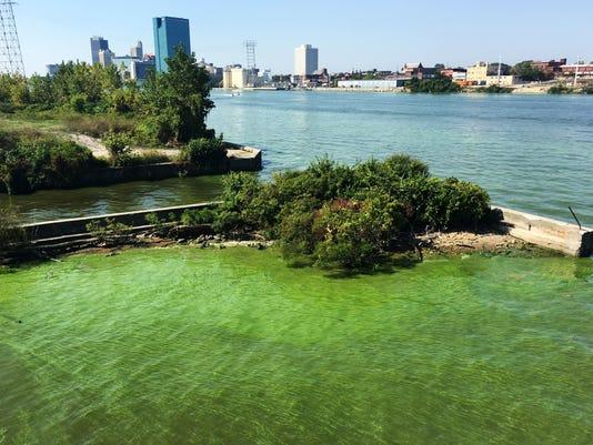 636421240914487015-green-algae-01.JPG
