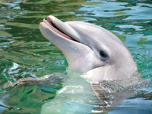 Alia, a female bottlenose dolphin