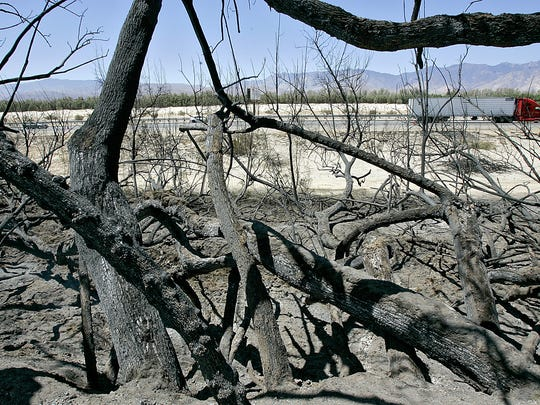 This 2009 file photo shows Tamarisk trees that burned along Interstate 10 in Thousand Palms. A Desert Sun reader questions the removal of such trees along Interstate 10 in the Bermuda Dunes area.