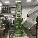 Green beans packer goes from niche to Virginia Shore success