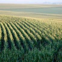 A cornfield in Nebraska in 2012.