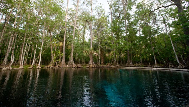 A small portion of the Silver Springs, one of the original tourist attractions in Florida and namesake of the state park in Ocala, can be seen reflecting light from below the surface of the Silver River on March 23, 2017, during a glass-bottom boat tour.