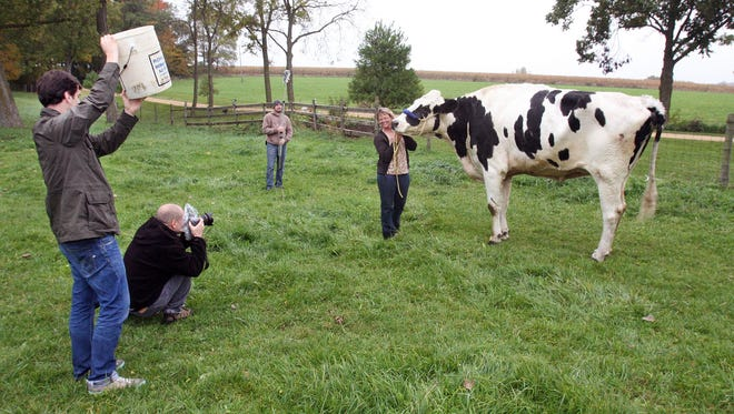 Patty Hanson holds onto Blosom, her Holstein cow, while Guinness World Records photographers take pictures.