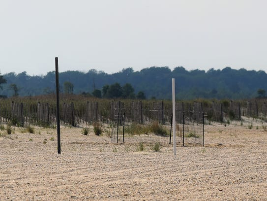 A fence enclosure aims to keep piping plover nests