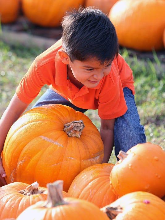 636416862611462794-1014-CCLO-Ns-pumpkin-patch-001.JPG