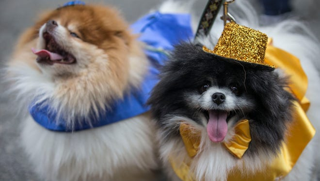 Bring your dog along to one of these pet-friendly parties.
