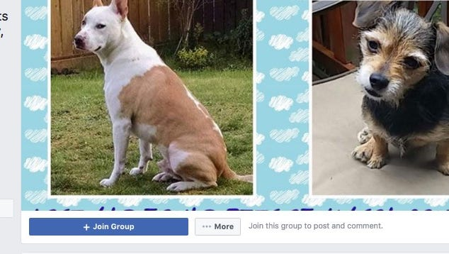 Mellanie Mcpheeters and Christine Ott started a Facebook page for lost and found pets in Mason County. Since they started the group, they find they are filling a gap left when the Mason County Sheriff's Office got rid of its animal control position.