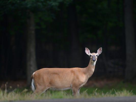 north jersey deer