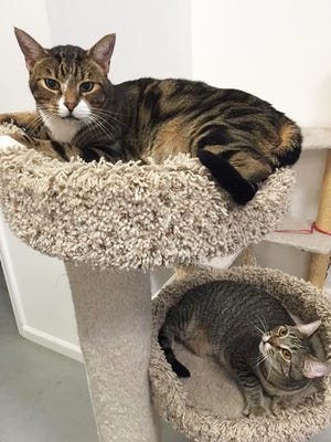 Ace and Hazel are among the cats who have been adopted from Central Thrift.