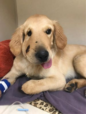 A puppy saved its owner from a rattlesnake bit during a hike on Friday.