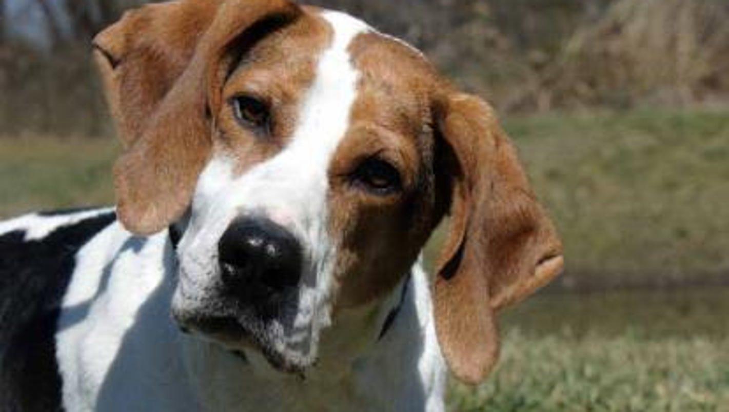 Burlington County Dog Adoption