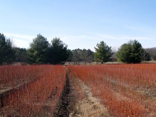 GEORGE O. WHITE STATE FOREST NURSERY