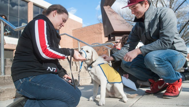 Rowan senior Nicole Puzio of Medford gives a treat to a 4½-month-old mix named Treat as Rowan student Chad Cunningham pets the dog on the campus of Rowan University in Glassboro.  Puzio is a puppy raiser for Canine Companions for Independence.  02.26.16
