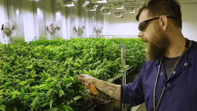 "Lead grower Dave Wilson shows off the ""Flower Room"" at the Ataraxia medical marijuana cultivation center in Albion, Ill."