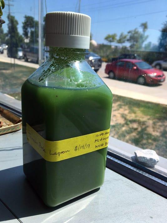 algae17p1.jpg