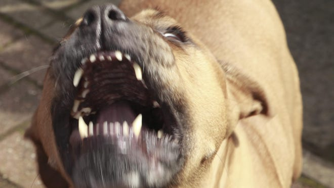 """Eight Gadsden County residents are facing more than 80 federal charges in connection with a """"large-scale,"""" illegal dog fighting ring involving about 100 dogs."""