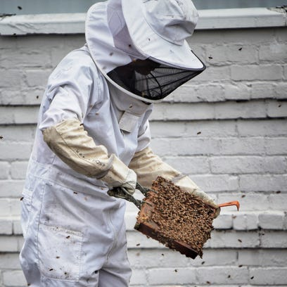 Nonprofit Bees in the D hit the roof to reverse decline in honey bee population