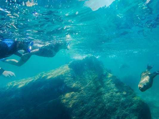 Snorkeling With Sea Lions at Espiritu Santo island (1)