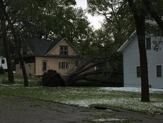 Trees were uprooted and buildings were damaged in a