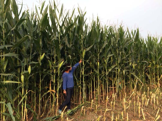 Jenny Cui stands next to corn stalks on her farm in China.