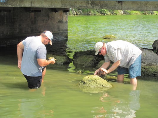 Lake Austin Zebra Mussel Inspection