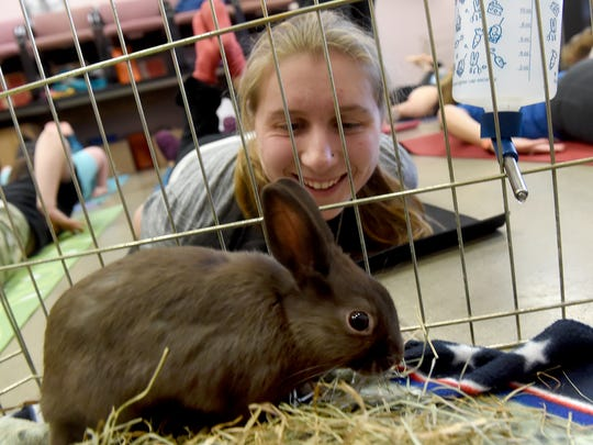 "Jamie Eichborn checks out one of the rabbits up for adoption during the ""Bunny Yoga"" class held at the York County SPCA on Saturday, Jan. 27, 2018. The yoga classes, held once a month with different animals, are a way for the SPCA to raise awareness and funds for the shelter."