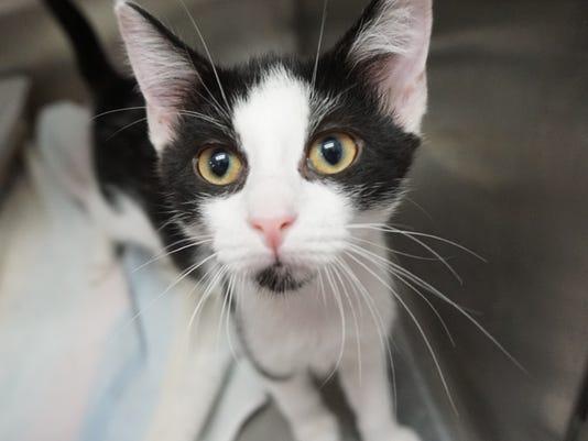 FMN Pets4 0730