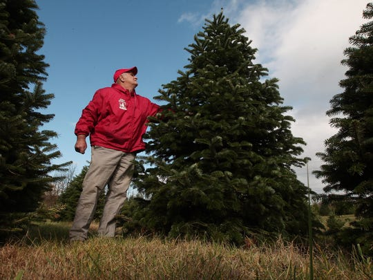 Perfect Christmas Tree Farm owner John Curtis is competing for national prize next year and the chance for his tree to be in the White House.