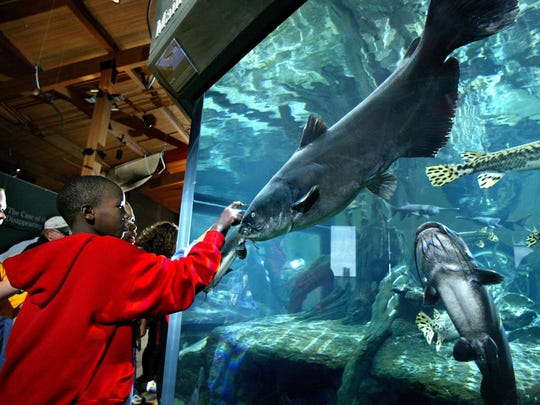 The National Mississippi River Museum and Aquarium is a place to stop in Dubuque while on a road trip to northeast Iowa