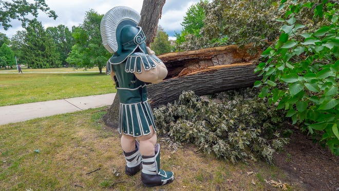 Michigan State University's mascott, Sparty, stands next to the campus' great white oak July 15, 2016, which had toppled the week before in a thunderstorm.