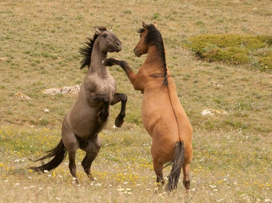 Stallions by Matthew Dillon.jpg
