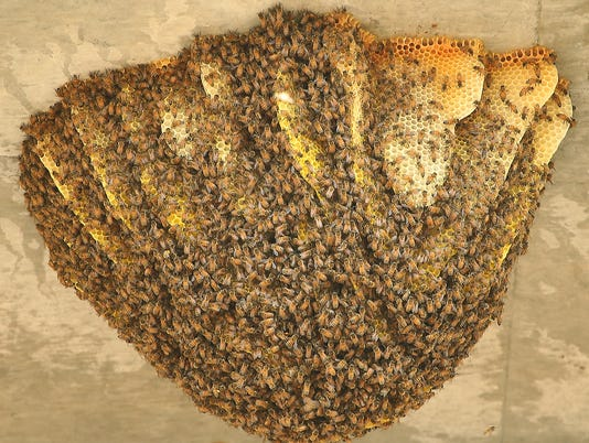 Warren-Bridge-Bees-Nest-01.JPG