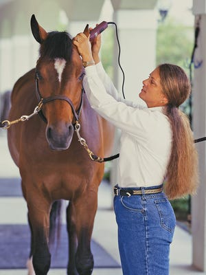 Dana Boyd-Miller has been a professional equine grooming expert for over 35 years.