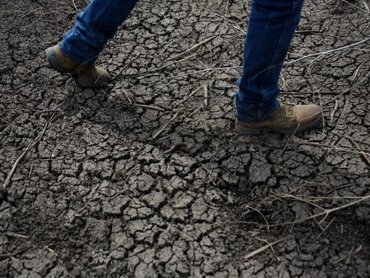 In this May 1, 2014 photo, fourth-generation rice farmer Josh Sheppard walks across the dried-up ditch at his rice farm in Richvale, Calif. California's 19th-century water laws give about 4,000 companies, farms and others unmonitored water while the state is mired in a three-year drought that has forced water cutbacks to cities and the nation's agricultural center. (AP Photo/Jae C. Hong)