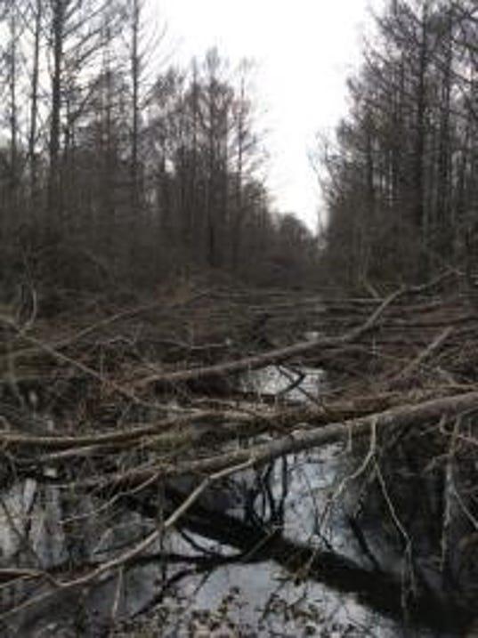 635588349757312317-cut-trees