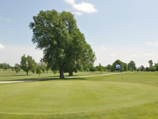The large tree guarding the front of the ninth green at Bill & Payne Stewart Golf Course sees more than its share of golf balls throughout the season.