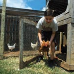 Nicholas Bitterling, 13, takes a chicken from a coop in 2014 that he and his brother Alexander built at their Portland home. The city of Gallatin is considering an ordinance that could end a ban on backyard chickens.
