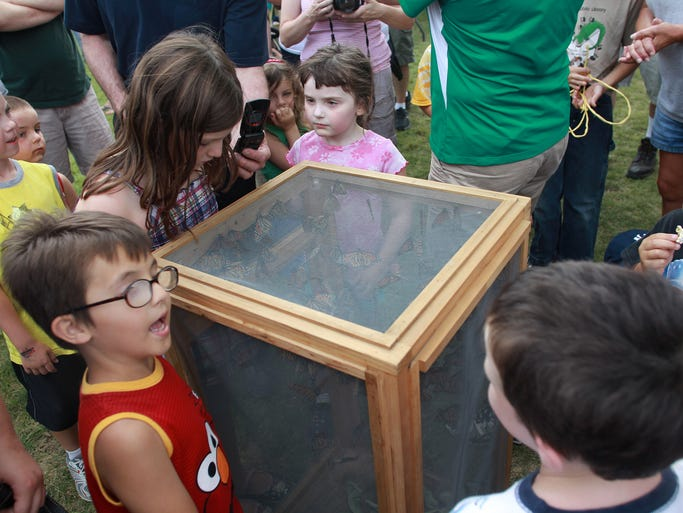 Children glance at a few dozen monarch butterflies before the butterfly release at the Johnson County Fair on Thursday, July 24, 2014. David Scrivner / Iowa City Press-Citizen
