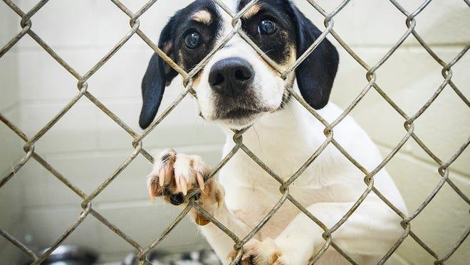Muncie's animal shelter is holding $5 adoptions Friday, Aug. 3, 2018.