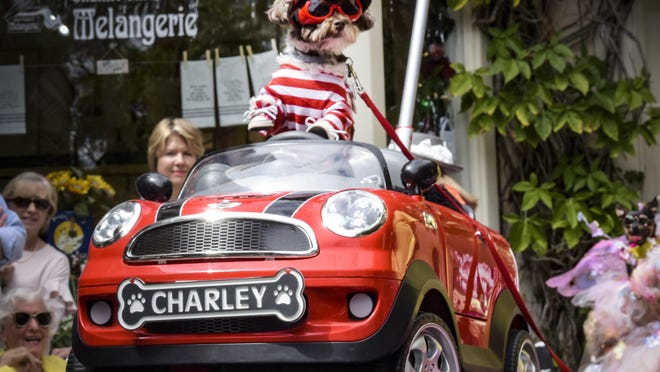 Charley cruises the runway in his red hot wheels at the 2019 Worth Avenue Pet Parade and Contest.