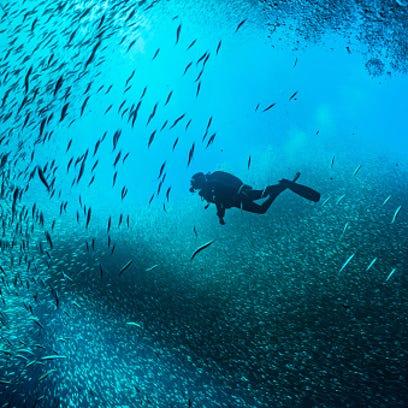 Scuba Divers Swimming In Between School Of Fish Undersea