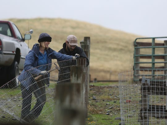 Farm Sanctuary's Northern California Shelter facilities supervisor Elise McClelland, from left, and project assistant Dean Adickes mend repair a fence Monday at the 300 acre sanctuary in Orland.