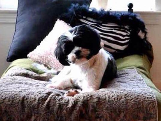 636590542346258433-Bijou-the-dog.jpg