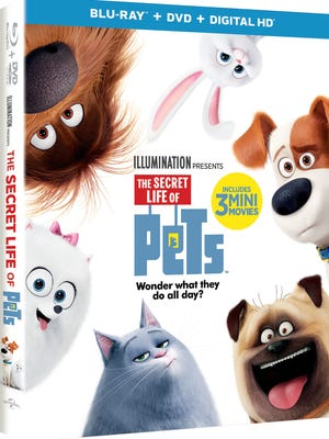 'The Secret Life of Pets' is out on DVD and Blu-Ray.